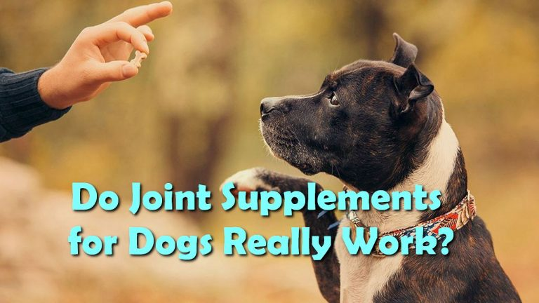 Do Joint Supplements for Dogs Really Work?